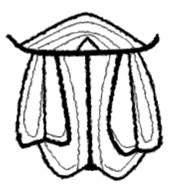 SymbolRing
