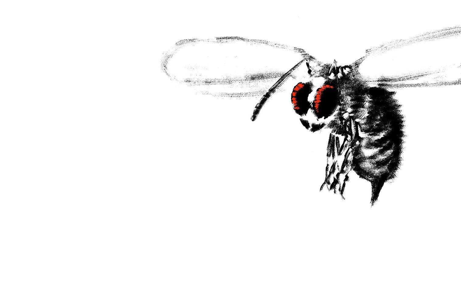 Bee, Giant (Picture)