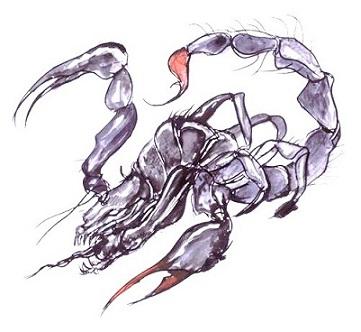 parasit4.jpg